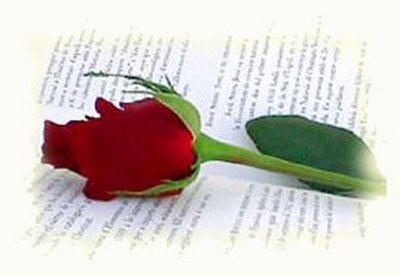 rosa BIBLIO